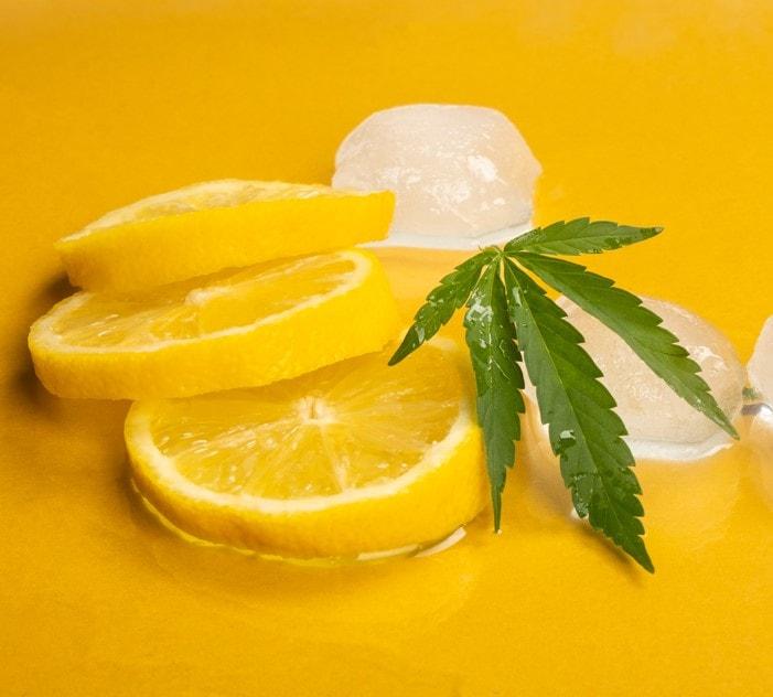 cannabis terpens